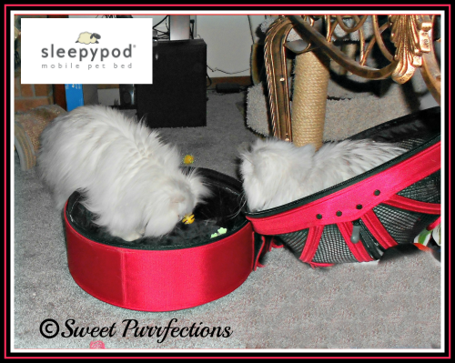 Truffle and Brulee in the red Sleepypod