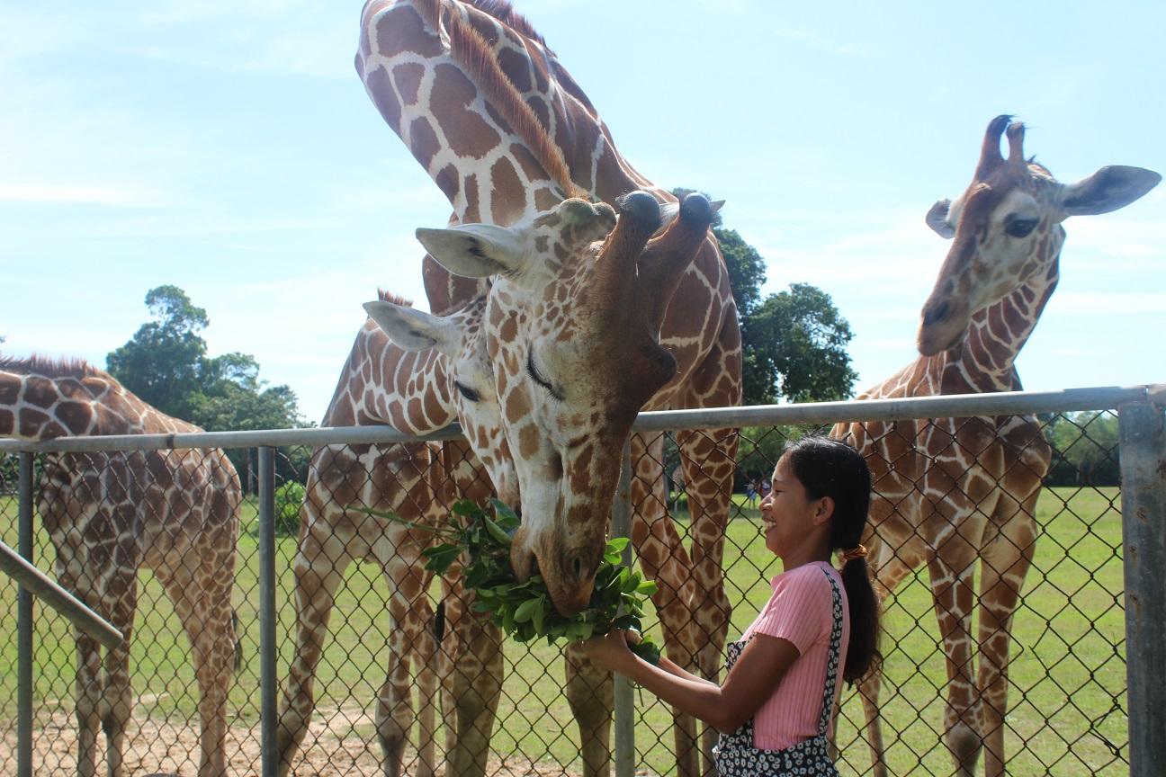 Calauit Safari Park in Coron Palawan