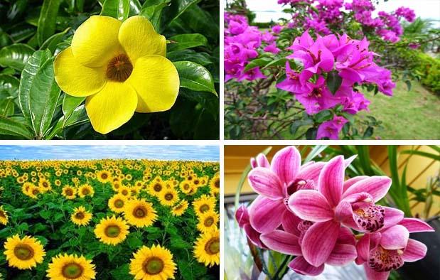Contoh Bunga Sempurna