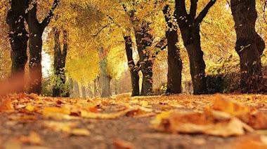 La importancia de las hojas caídas en otoño para el suelo