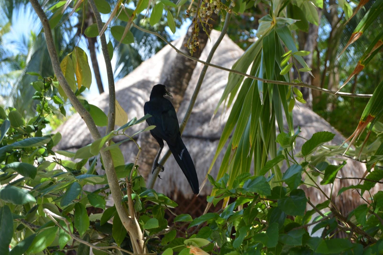 wildlife, nature, bird, holiday, mexico, playa del carmen, travel, traveling, trees, palm trees