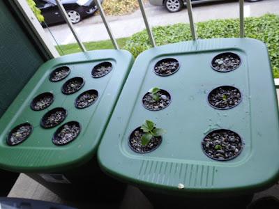 Planted Kratky bins