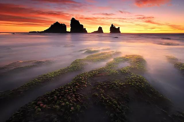 selandia baru, pantai, bintang laut, travel