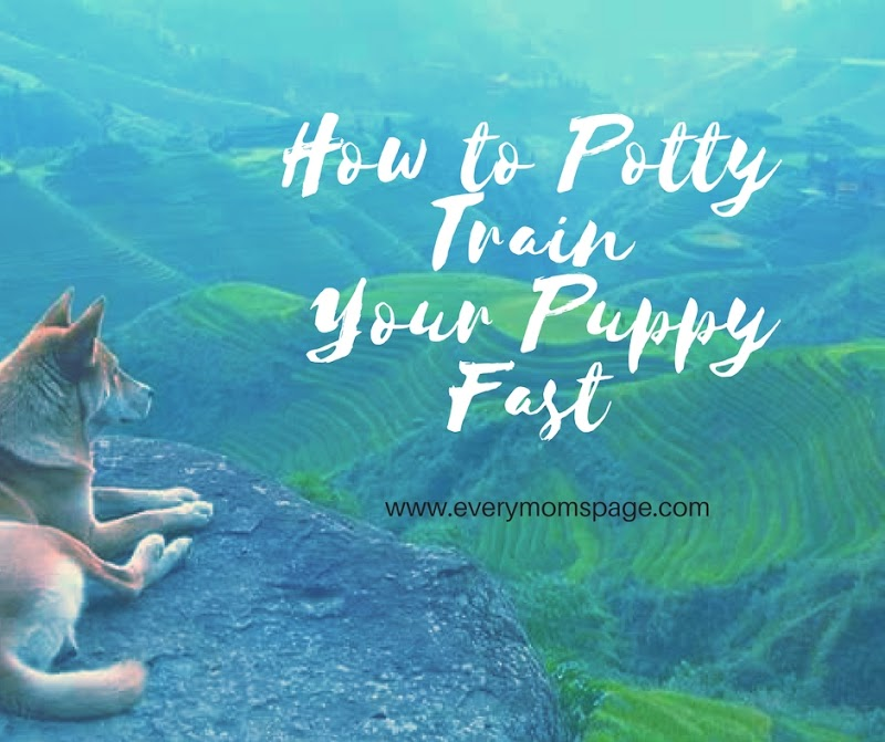 How to Potty Train Your Puppy Fast