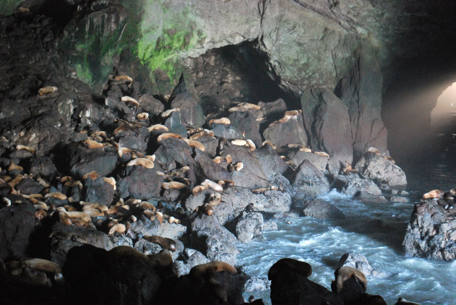 Baker Family Blog: Sea Lion Caves