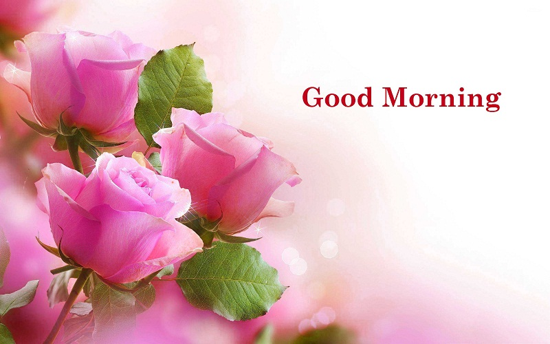 50 Sweet Good Morning Images for Whatsapp Free Download