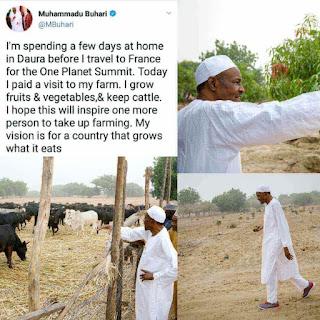 President Buhari Pictured At His Farm In Daura