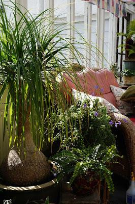 plants, flowers, foliage,