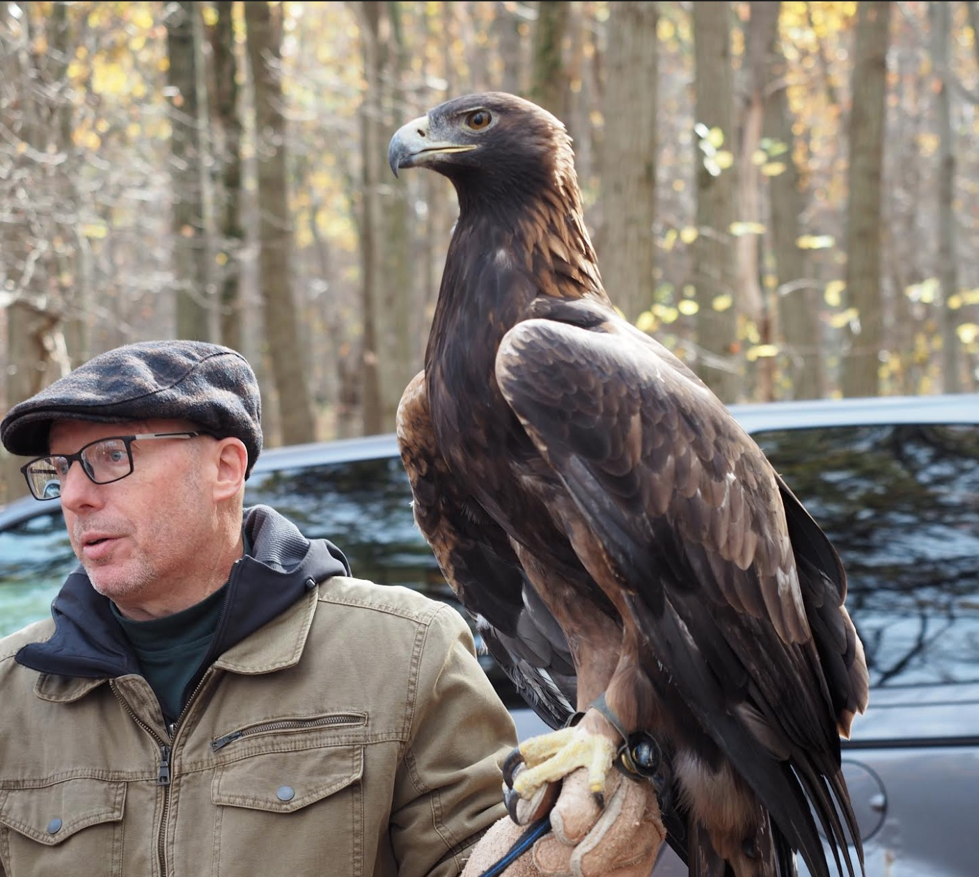 Pa Environment Digest Blog Golden Opportunity To See A Golden Eagle North America S Largest Bird Of Prey Nov 3 At Hawk Mountain