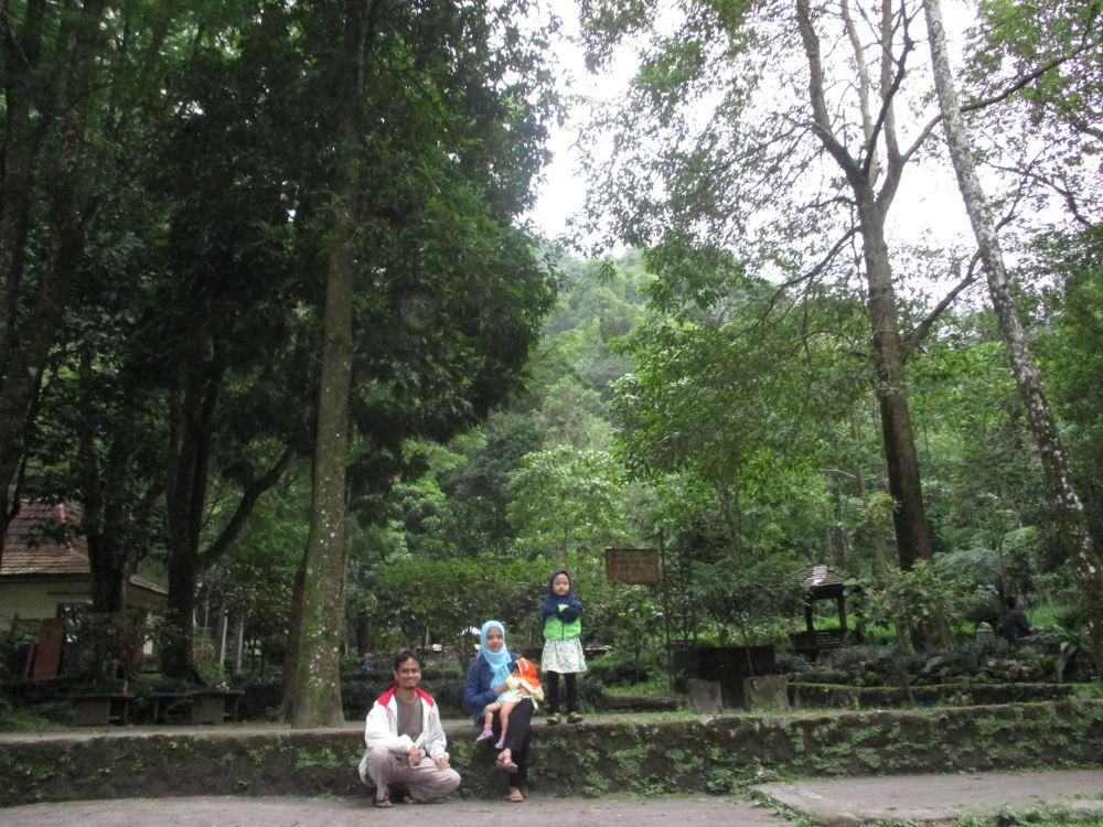 Monyet-monyet Gunung Merapi Yogyakarta