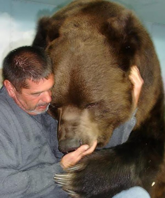 Người đàn ông này quá dũng cảm khi làm bạn với gấu khổng lồ suốt 21 năm qua