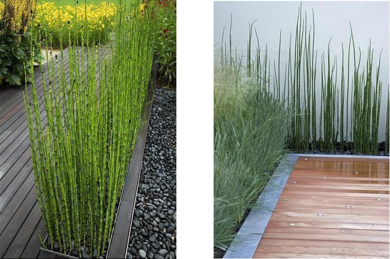 El muro vegetal cola de caballo for Que planta para muro exterior vegetal