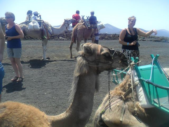 Timanfaya National Park | Camel Ride | Lanzarote