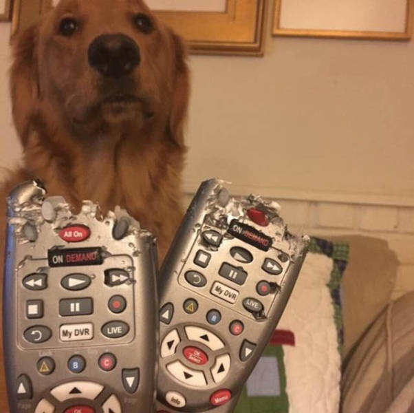 Cute dogs - part 149, funny dog picture, best cute dogs, adorable dog photos
