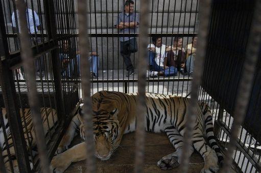 Rumania prohíbe presentar animales salvajes en circos