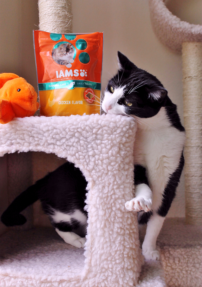 Find IAMS™ cat food and treats at your local Walmart, The IAMS™ cat range features a variety of specially formulated recipes to target your cat's individual needs from hairball care and prevention to digestive health and oral care. #IAMSCat (AD)