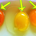 Signs of a Healthy Chicken: Egg Yolk Color Reveals About The Health Of The Chicken