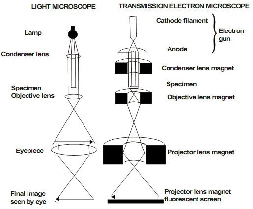 difference between light microscopy and electron microscopy pdf