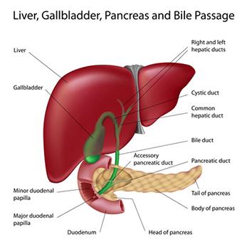 Obat Tradisional Tuntaskan Liver
