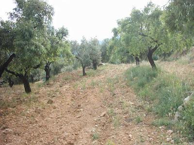 La pileta, camino, pantano de Pena, embalse, finca, almendros, olivos 8