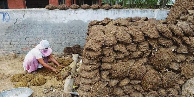 Perang Kotoran Sapi Di India