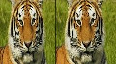 Tebak Gambar Uji Ketajaman Mata Kamu Cari 5 Perbedaan Gambar Berikut Ini