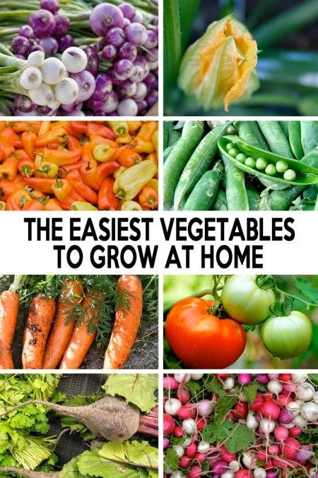 the easiest vegetables to grow at home vegetable