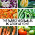 The easiest vegetables to grow at home #vegetable_gardening