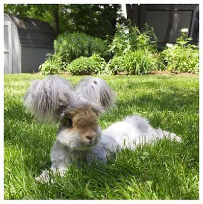 Nevjerovatno: Da li je ovo zec ili ne?