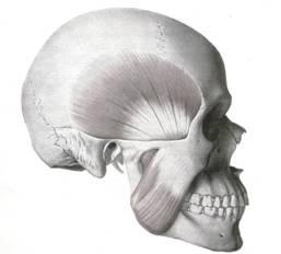 El dolor en las partes derechas de los riñones da el dolor en la parte derecha del ovario