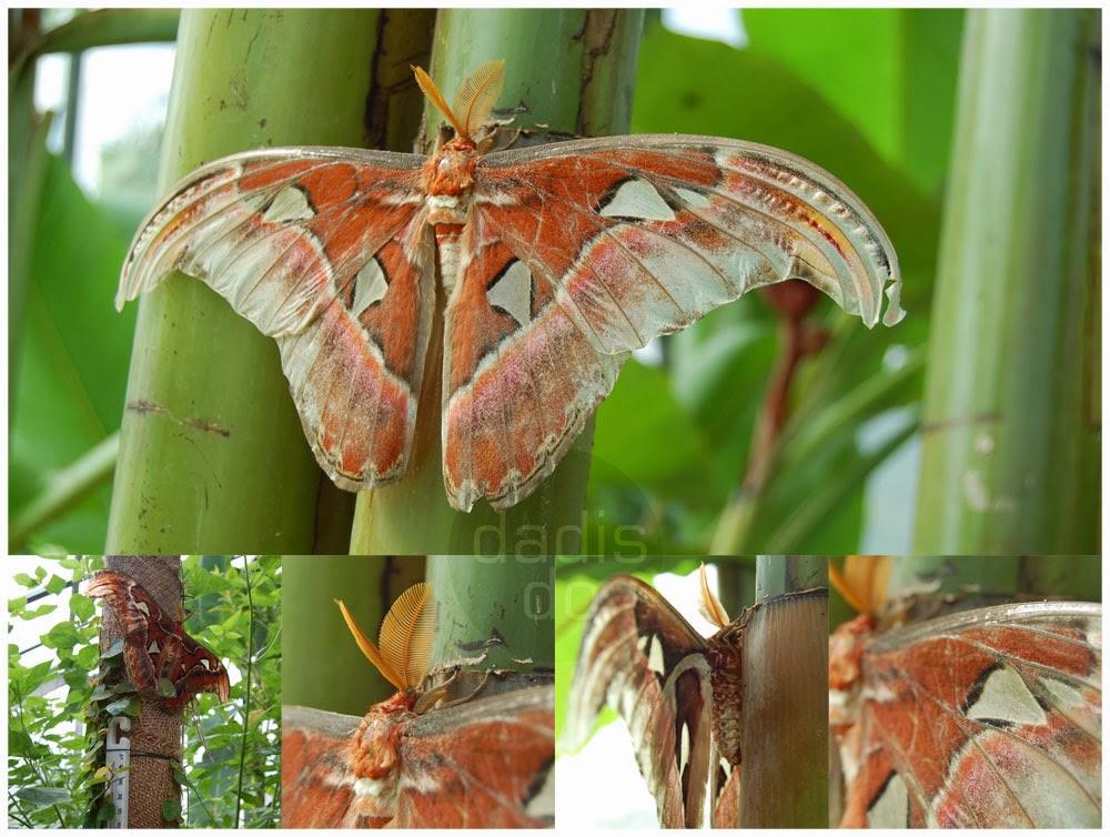 LU Botāniskā dārza tauriņu mājas taureņi