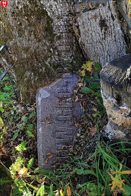 Деревья проросшие сквозь надмогилье у костела