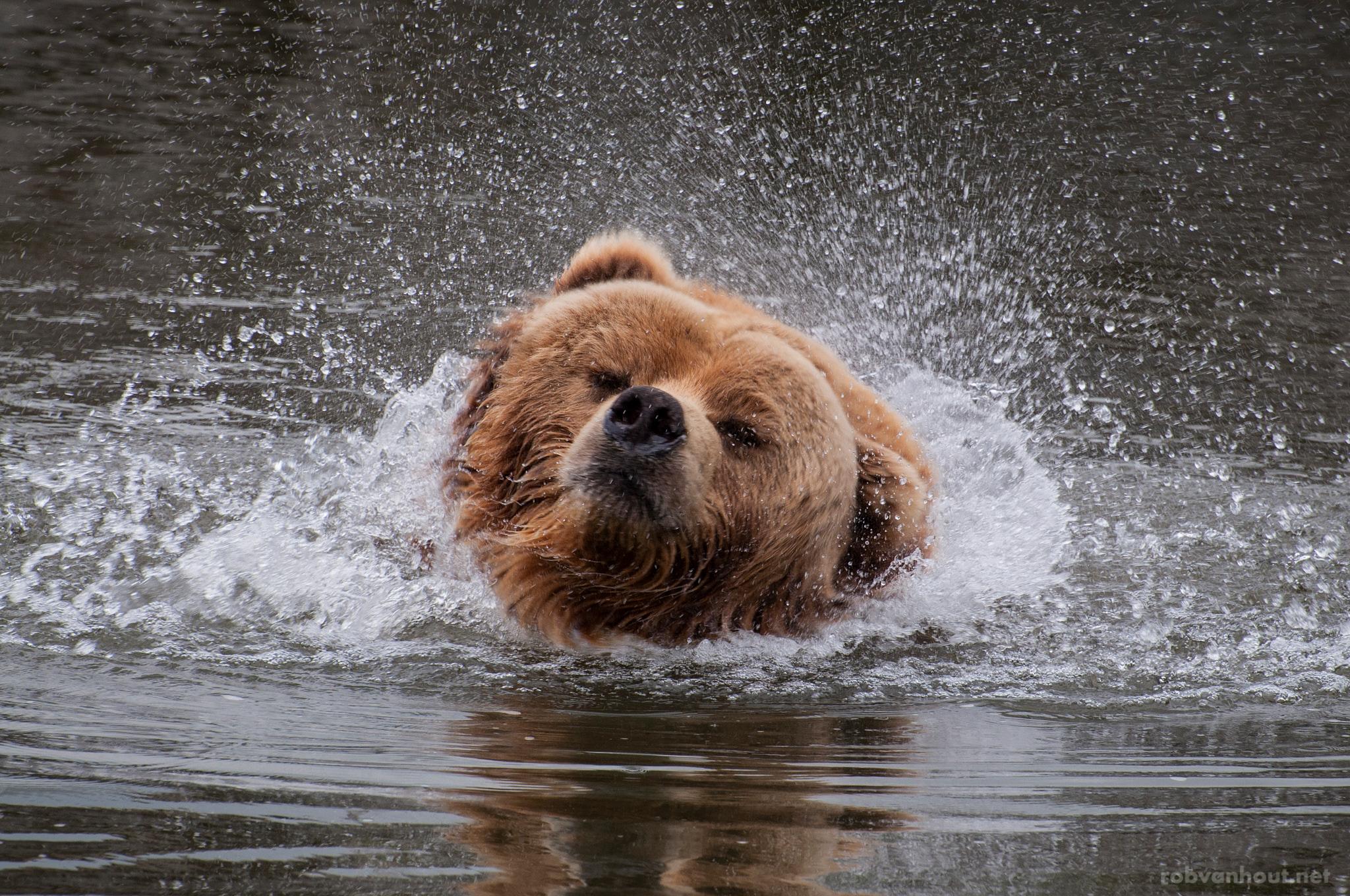 Kodiak Bear — Zoom Erlebniswelt