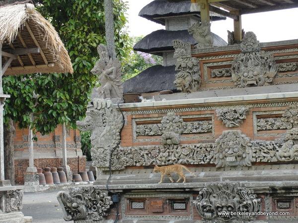 cat patrols at Taman Ayun Temple  in Mengwi village, Bali
