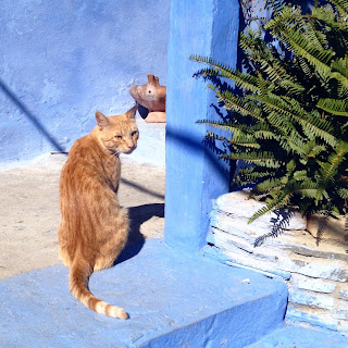 Cats everywhere in Chefchaouen, Morocco