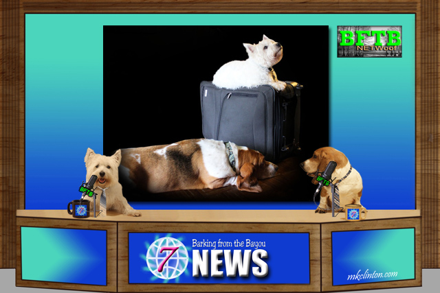 BFTB NETWoof News reports on pet travel