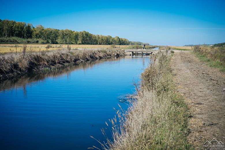 Canal no meio dos arrozais