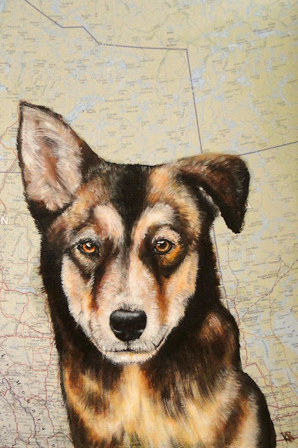 oil painting of a malamute, husky, sled-dog