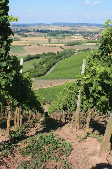 Steil steigen die Weinberge hinter Ipsheim auf © Copyright Monika Fuchs, TravelWorldOnline