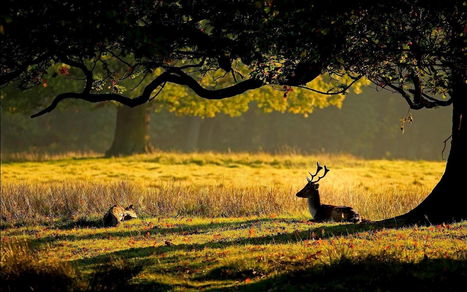 Под деревом загрузить