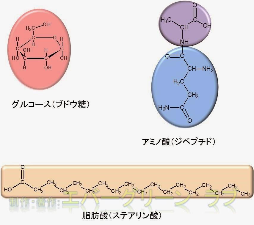 中学受験 理科 生化学 消化 吸収の仕組み 体の仕組み 食べ物 どこから吸収 吸収が早い ブドウ糖(グルコース)、アミノ酸、脂肪酸 脂肪酸、長鎖、短鎖 リンパ 中性脂肪 短い脂肪酸 リポタンパク カイロミクロン キロミクロン 静脈  動脈 消化に時間がかかる 吸収できない エネルギー 栄養素 リノレン酸 化学構造 アミノ酸 すぐに吸収