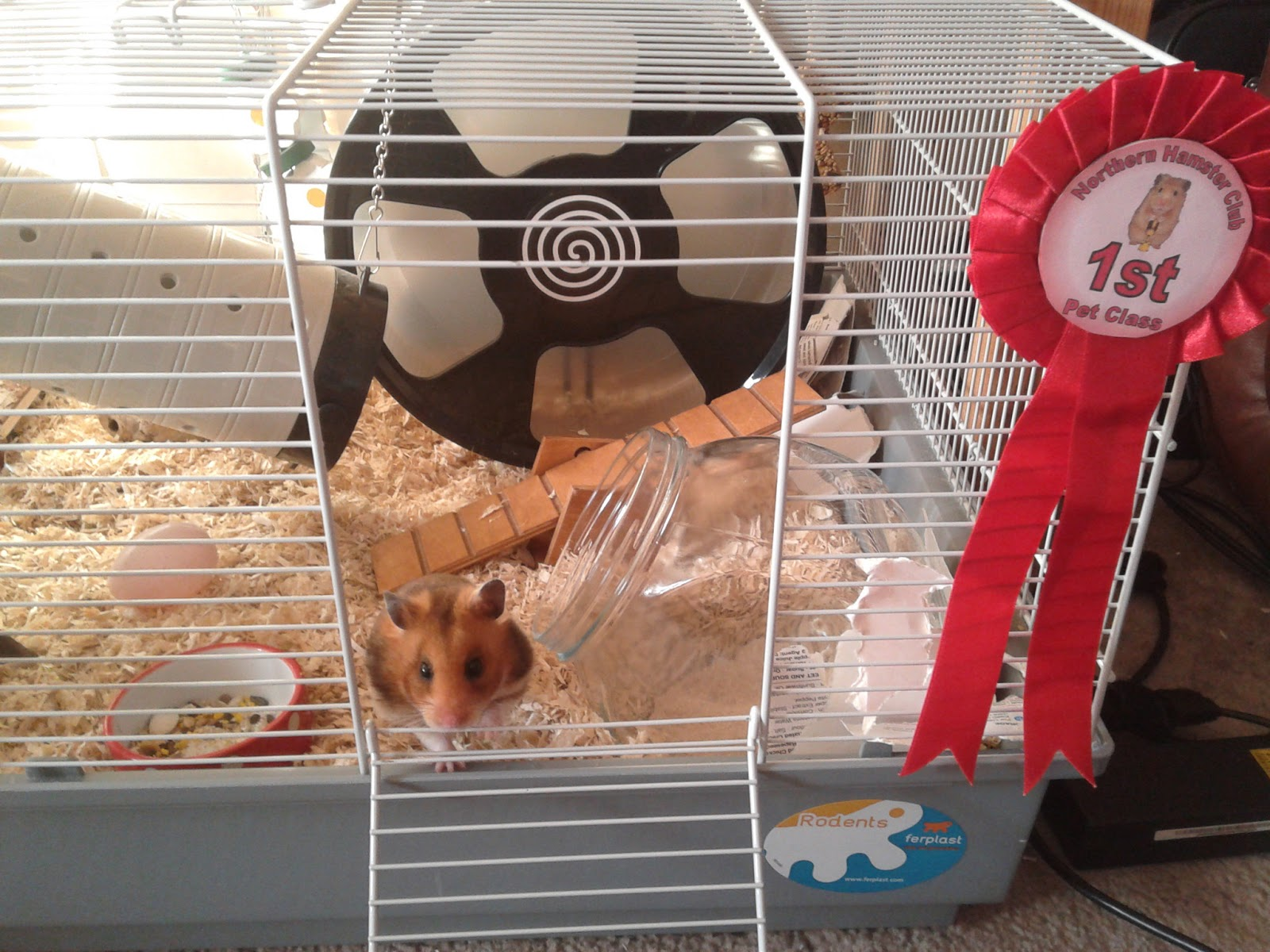 unexpected hamsters hamster shows. Black Bedroom Furniture Sets. Home Design Ideas