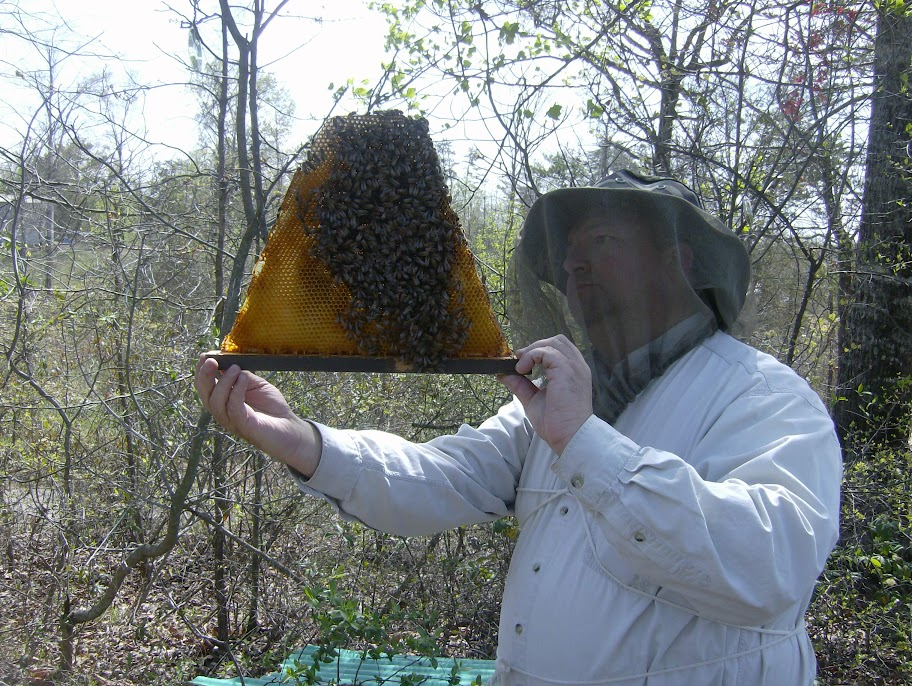 treatment-free top bar hive beekeeping