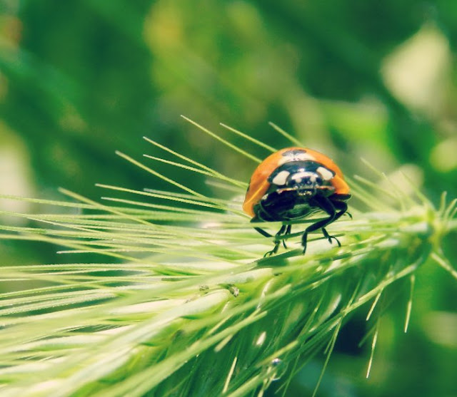 Ladybug on a leaf: growcreative