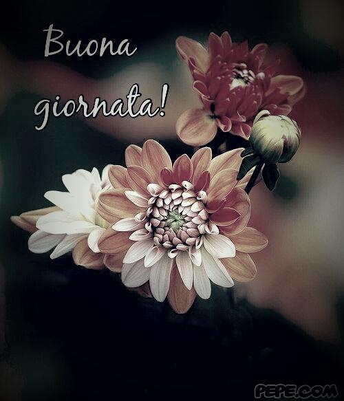 Frasi D Amore Buona Giornata Con Bellissimi Fiori