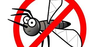 Cara Sederhana Mengusir Nyamuk Tanpa Bahan Kimia