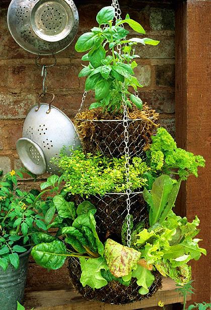 Dishfunctional designs hanging basket herb garden diy for Creating a kitchen garden