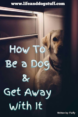 How to Be a Dog and get away with it.