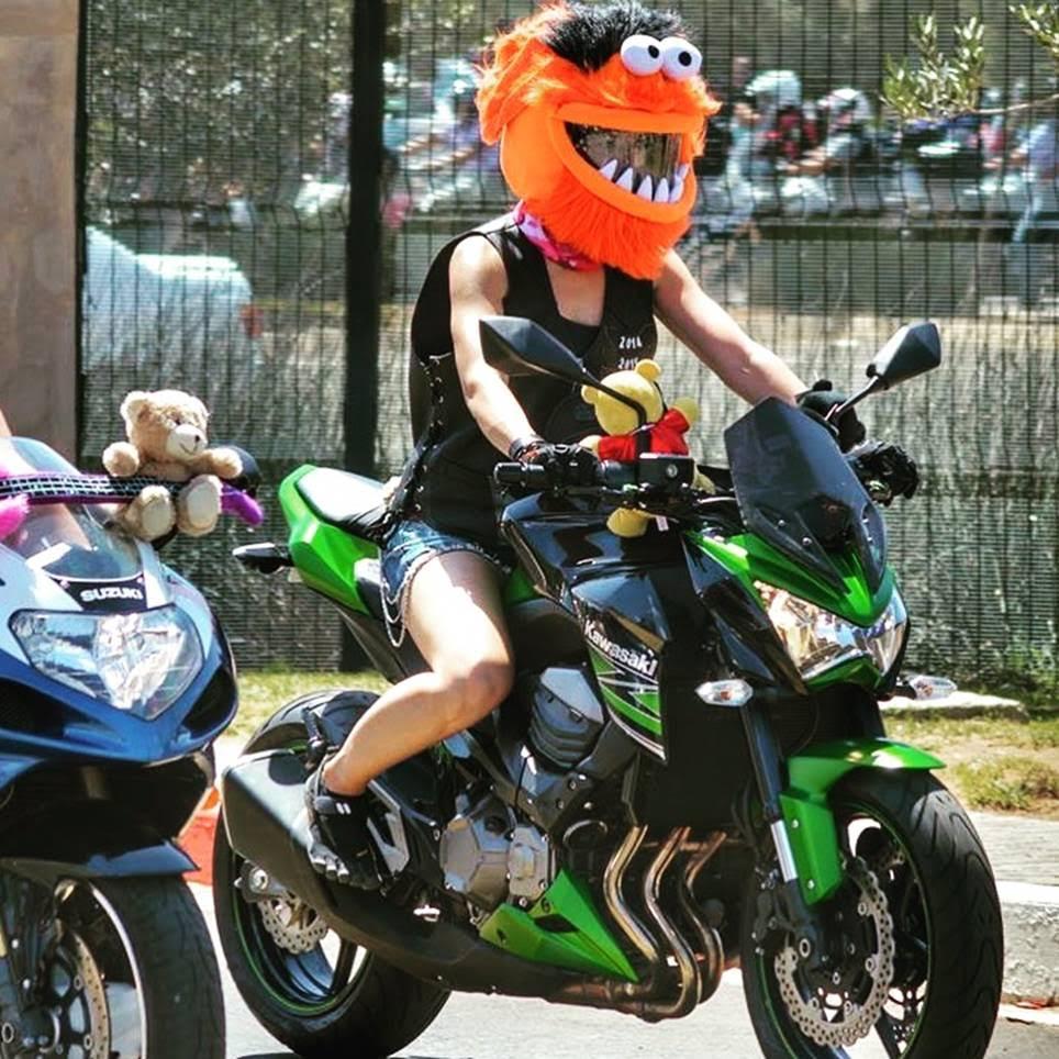 Animal Motorcycle Helmet Cover You