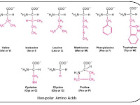 Amino Acid Diagram